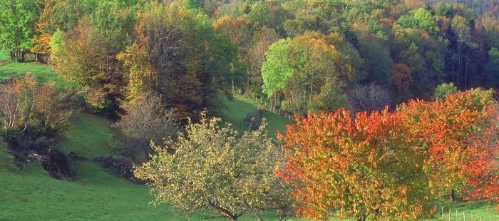 automne en revermont