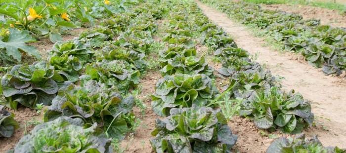 planche salade.jpg