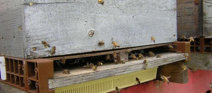 Une ruche.jpg
