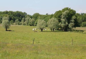 La ferme du Poirier