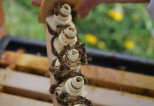 Le rucher L\'Miel