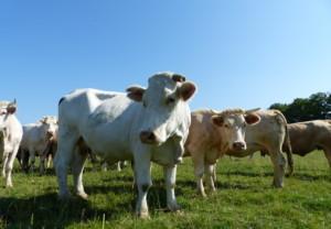 La ferme de Montsouge