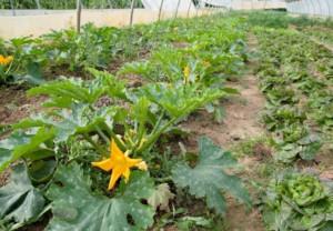 Bresse Nature et Jardins